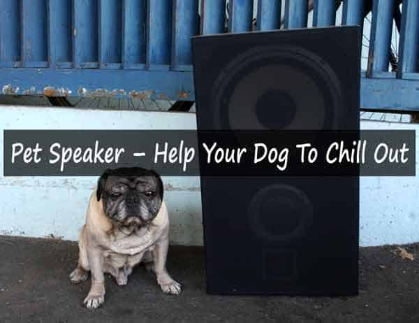 Help Your Dog To Chill Out