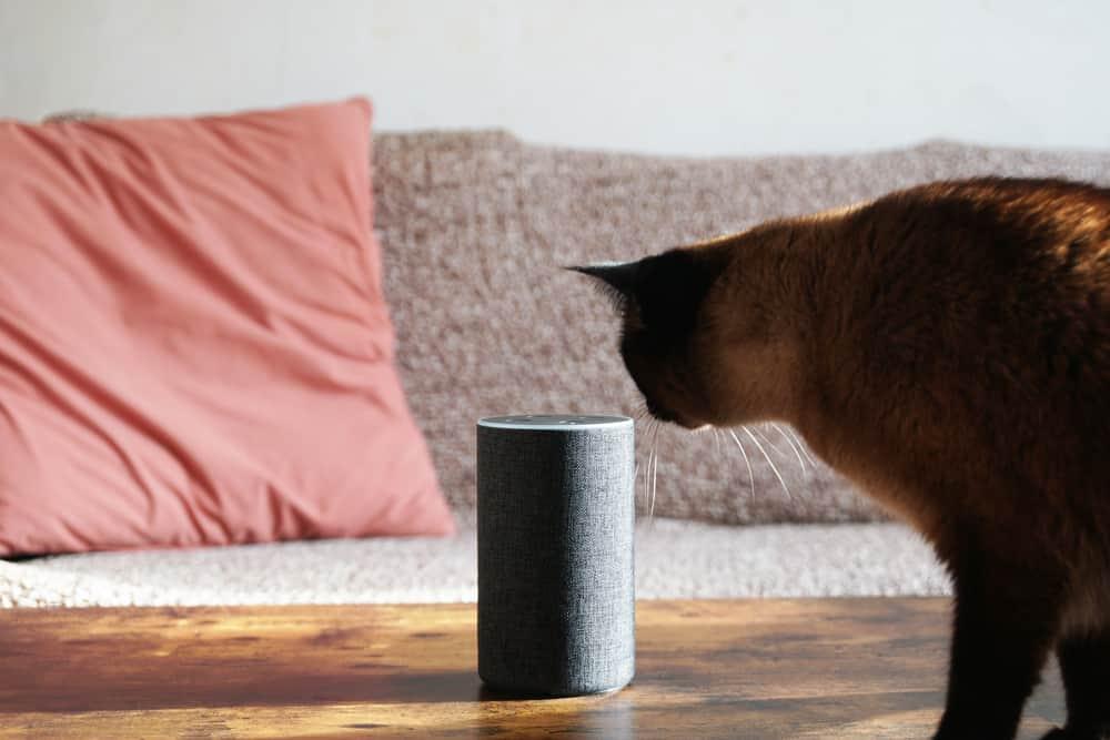 cat examines smart speaker